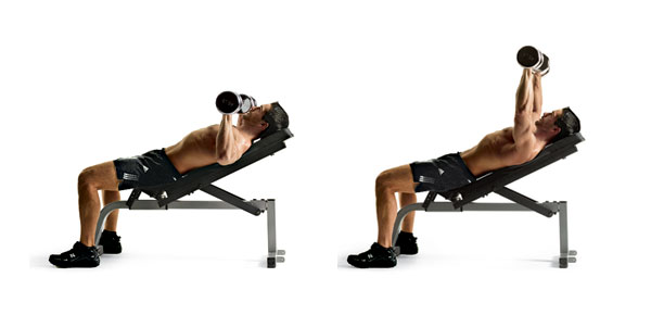 Weight Benches Chest Workout With Weights